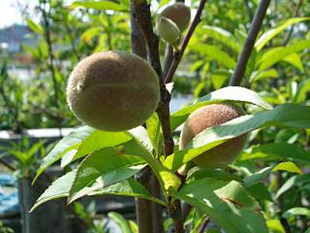 Almond (8).jpg