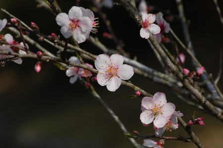 Almond (1).jpg