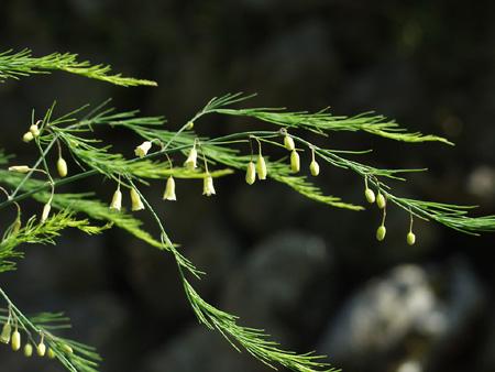 Asparagus (11).jpg