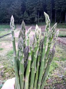 3月の野菜栽培 |暖地・中間地はタネまきを開始