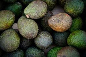 冬に収穫できる果実たち