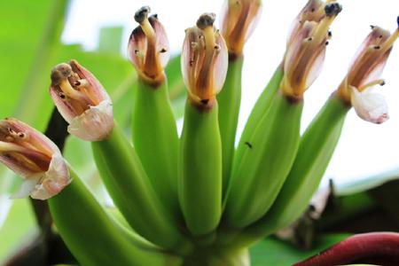 Banana (1).jpg
