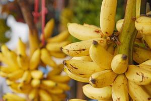 バナナの品種選び