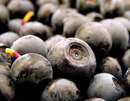 Bilberry (2).jpg
