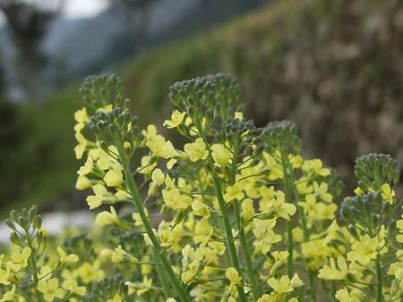 Broccoli (5).jpg