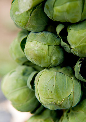 Brussels sprouts1.jpg