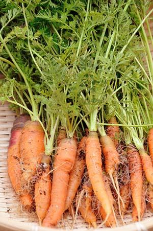 CarrotA.jpg