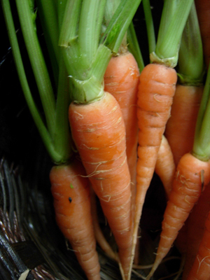 CarrotA20(6)-2865a.jpg