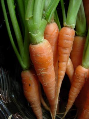 CarrotA (6).jpg