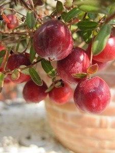Cranberry120(11).jpg