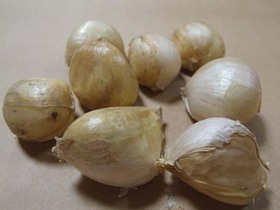 ジャンボニンニクの育て方|9〜10月が植え付け適期