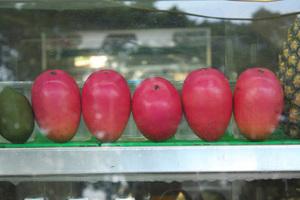 マンゴーの育て方|温度と水分の管理がポイント