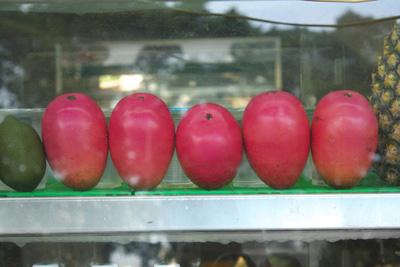Mango (1).jpg