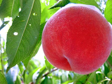 Peach (1).jpg