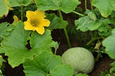 Pumpkin2-46d2a.jpg