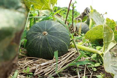 PumpkinB.jpg