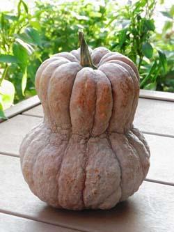 PumpkinC.jpg