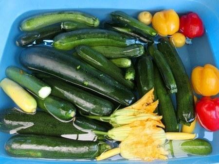 Zucchini005.jpg