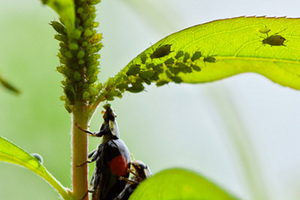 有機栽培と病害虫