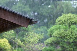 梅雨・大雨の時のタネまきのコツは?