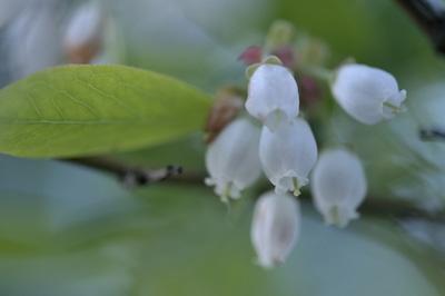 blueberrynew (2).jpg
