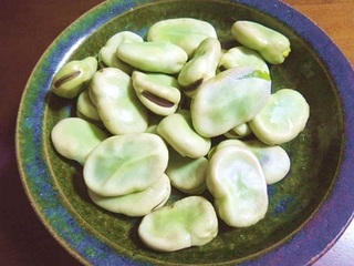 broad bean (2).jpg