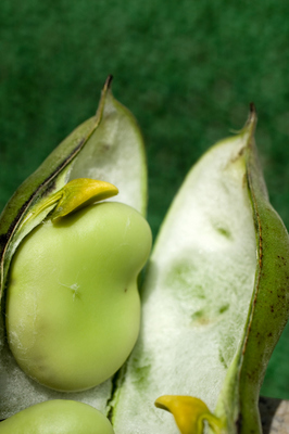 broad bean (8).jpg