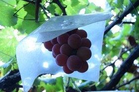 果樹 植え付け・植え替え時期