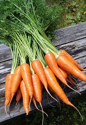 carrot (1).jpg