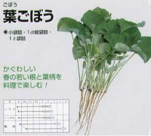 葉ゴボウの栽培