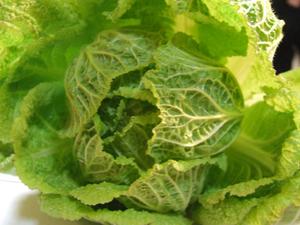 ハクサイとは?|万能野菜、寒さにあたると甘く美味