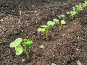 タネまきの方法|発芽率を高めて効率良く