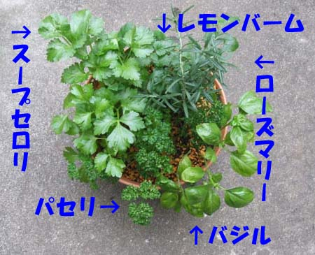 herb-yoseue.jpg