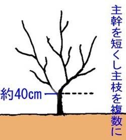 ダイダイ 庭植えの育て方
