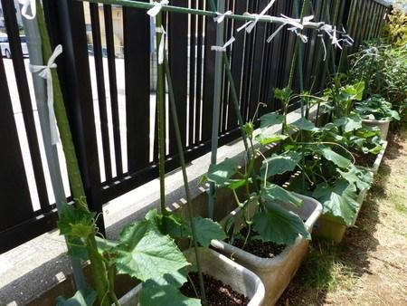 kyuri planter002.jpg