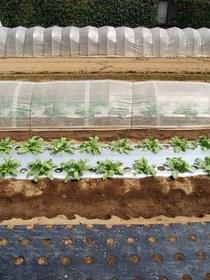 野菜 梅雨対策