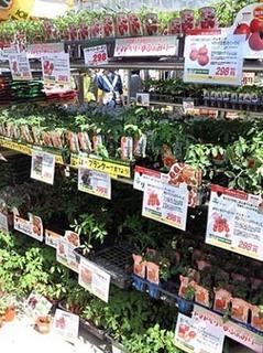 良い苗の選び方|元気な苗を見抜くコツ