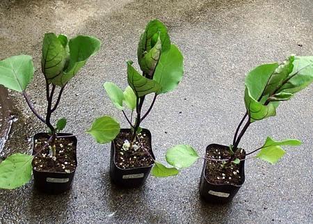 nasu-planter01.JPG