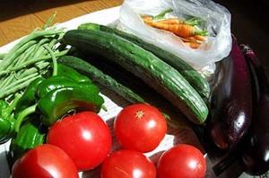 夏野菜 種類と育て方