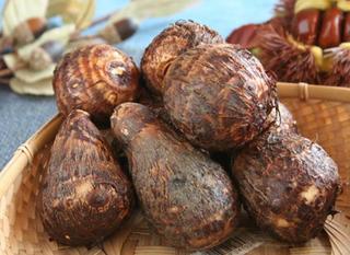 サトイモの種類と特徴 画像
