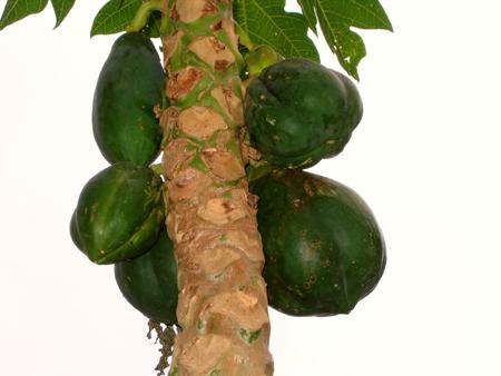 papaya (6).jpg