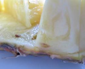 パイナップルとは?|とっても意外な実り方をします