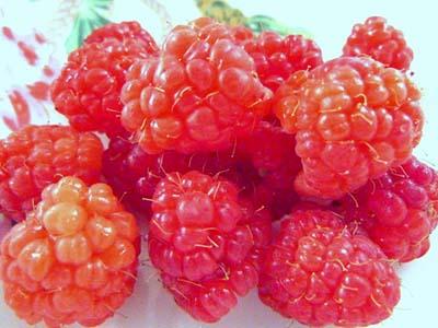 raspberry (8).jpg