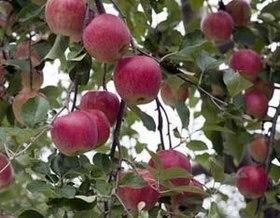 果樹苗植え付け時期