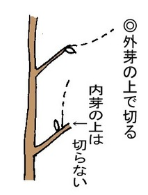 sentei2.jpg