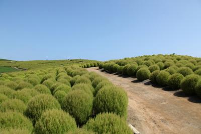 summer cypress.jpg