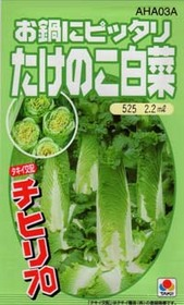 たけのこ白菜の育て方