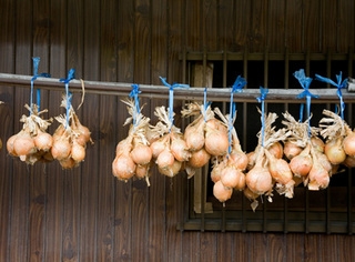 タマネギの収穫時期と保存方法のポイント