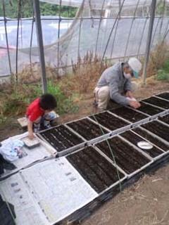 タネまきと間引き|健康な苗を育てる方法とコツ!