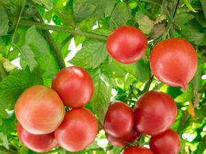 有機肥料 種類と働き